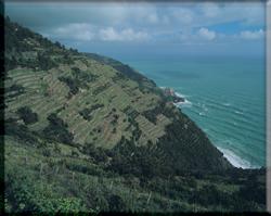 Immagine tipica della costa delle Cinque Terre